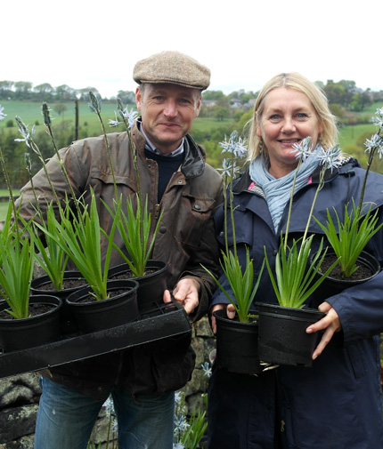 Buy Camassia Bulbs - January to February